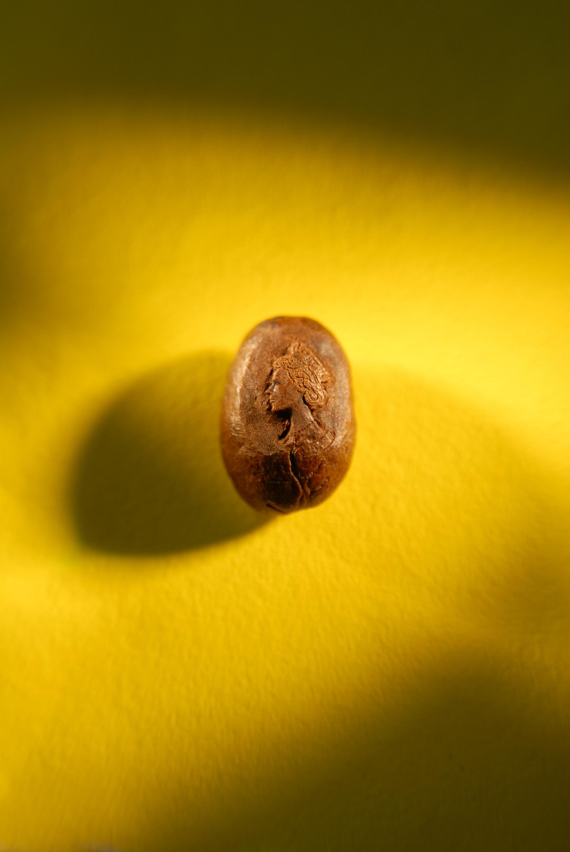 Willard Wigan - The Queen on a Coffee Bean